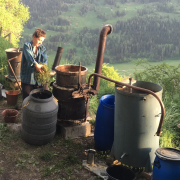 Florence distille arolle